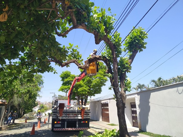 Cemig alerta: podas de árvores devem ser feitas com máxima atenção para evitar acidentes com a rede elétrica